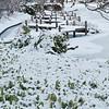 Mo Botanical Garden Dec 26 2010-16