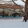 Mo Botanical Garden Dec 26 2010-7