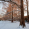 Mo Botanical Garden Dec 26 2010-5