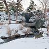 Mo Botanical Garden Dec 26 2010-20
