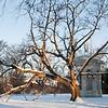 Mo Botanical Garden Dec 26 2010-2
