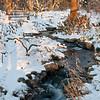 Mo Botanical Garden Dec 26 2010-10