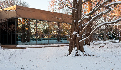 Mo Botanical Garden Dec 26 2010