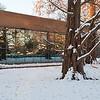 Mo Botanical Garden Dec 26 2010-8