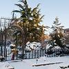 Mo Botanical Garden Dec 26 2010-3