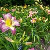 Mo Bot Garden Wide Angle Shots-16