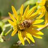 preying mantis MBG 090712-13