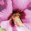 preying mantis MBG 090712-10