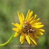 preying mantis MBG 090712-16