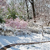 Spring Snow Saint Louis March 27 2011-14