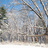 Spring Snow Saint Louis March 27 2011-4
