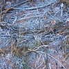 Moab Utah AMGA Meetings October-November 2009 - Frost on Trail Detritus