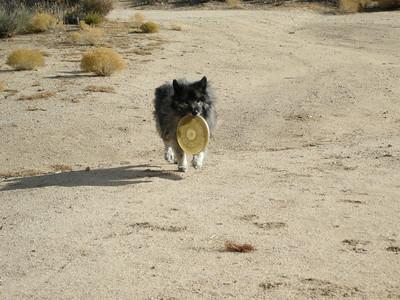 """Bela: """"Here's frisbee. Throw again?"""""""