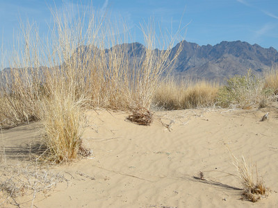 Kelso Dunes area in Mojave National Preserve.