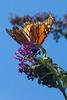 Monarch4100