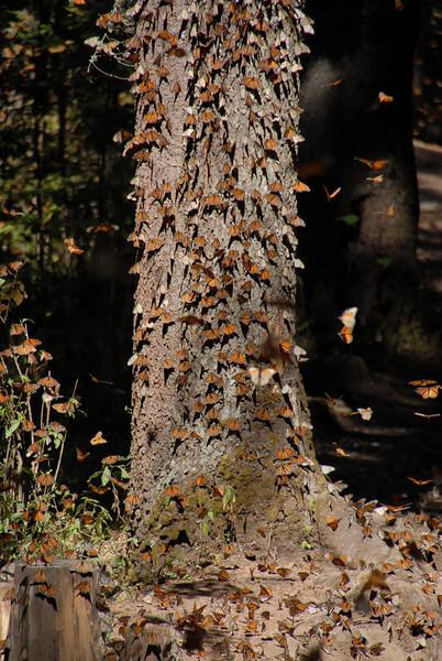 Butterflies, Rosario_139