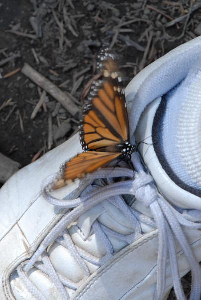 Butterflies, Rosario_155