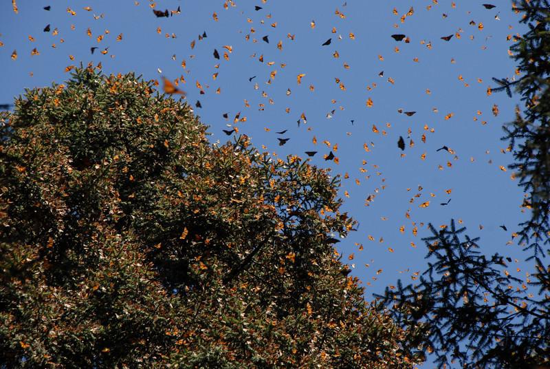 Butterflies, Rosario_128