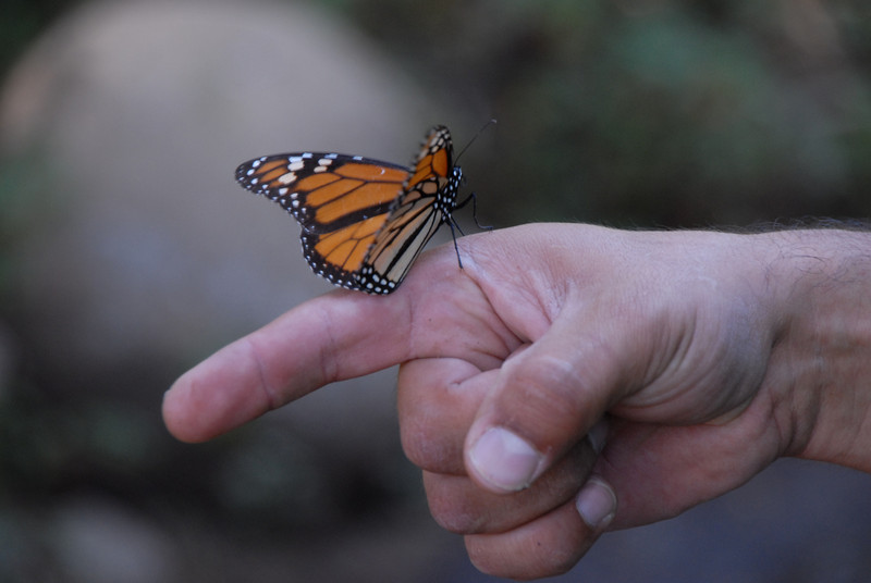 Butterflies, Rosario_073