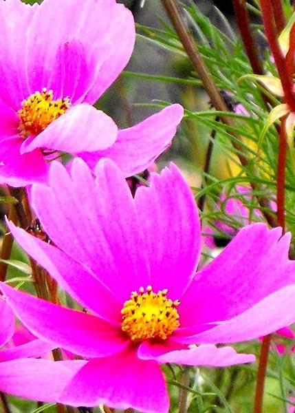 Delicate October blooms.