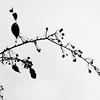 A lone branch,,,