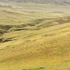 Przewalski's horse (Equus ferus przewalskii) landscape, Hustai National Park, Mongolia