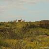 Argali females (Ovis ammon), Ikh Nart Nature Reserve, Mongolia