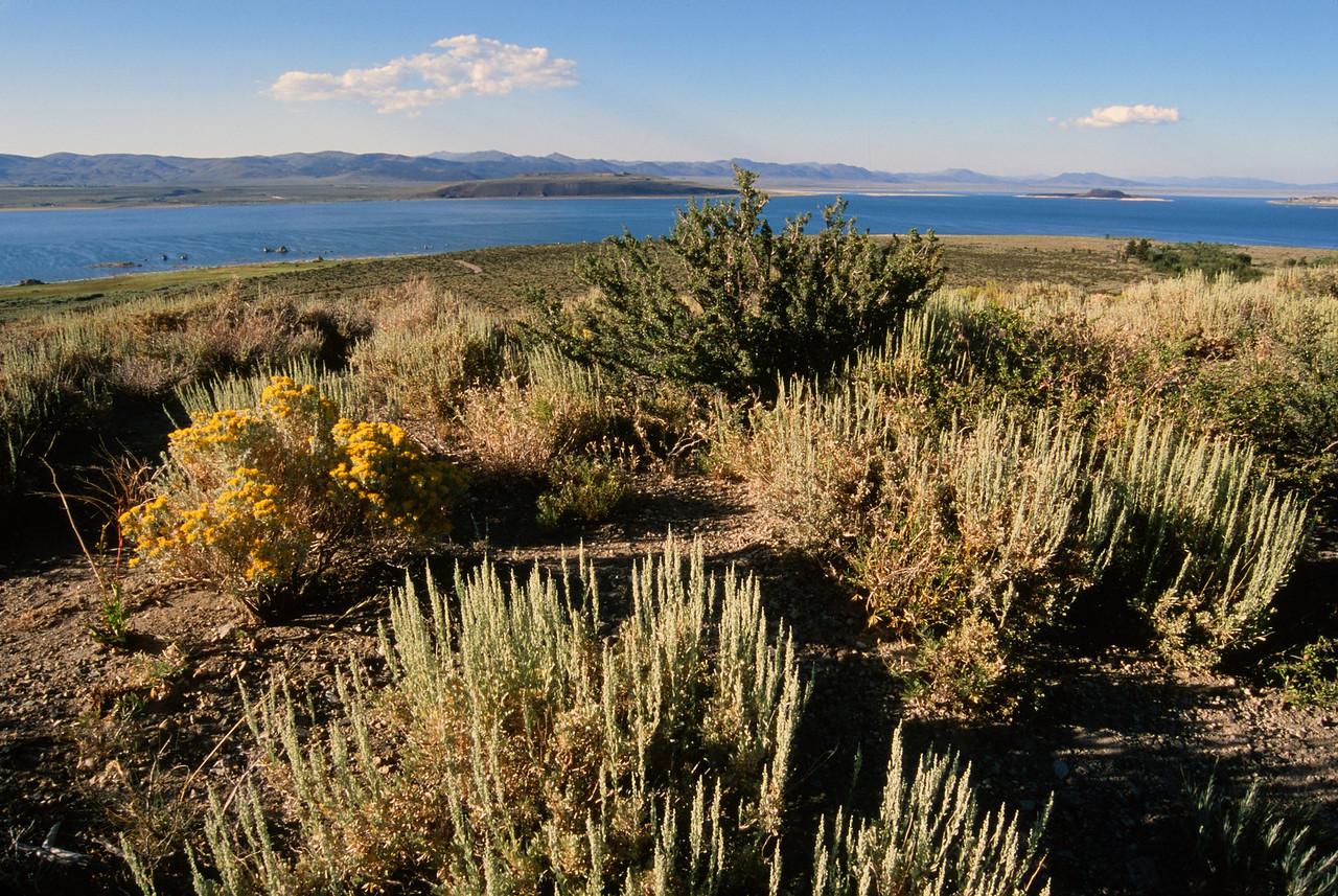 An Eastern Sierra View