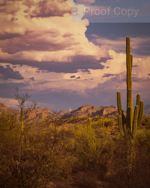 Monsoon Clouds and Saguaro-Bush Highway