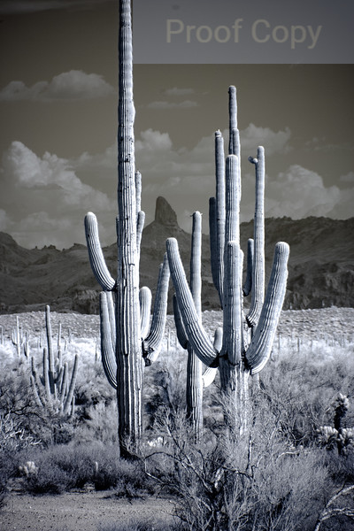 Weavers Needle and Saguaros