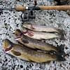 Litt av dagens fangst..Tur på Gråsida 07.08.2010