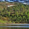 Skodde i fjellet..men stor aktivitet blant fisken i vatnet.....07.06.2011.