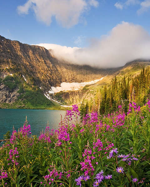 Wildflowers on Koessler Lake, Bob Marshall Wilderness