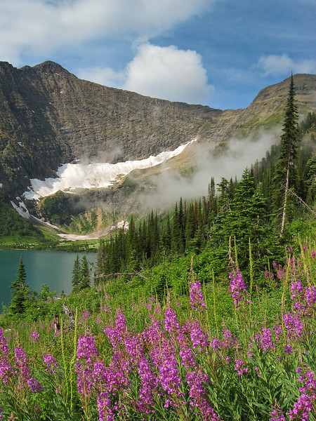 Fireweed and Ptarmigan Mountain, Bob Marshall Wilderness, MT