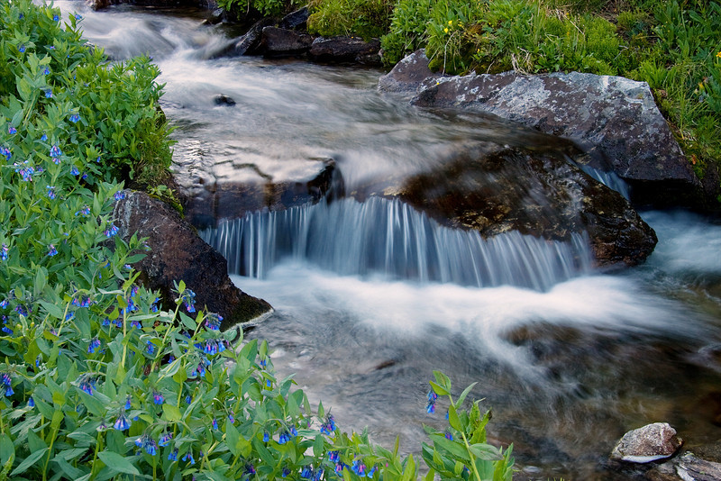 Wilderness Stream 2, Hilgard Basin<br /> Lee Metcalf Wilderness, Montana