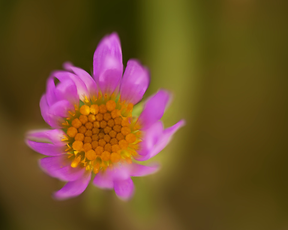 Tiny Beauty<br /> C.M. Russell National Wildlife Reserve