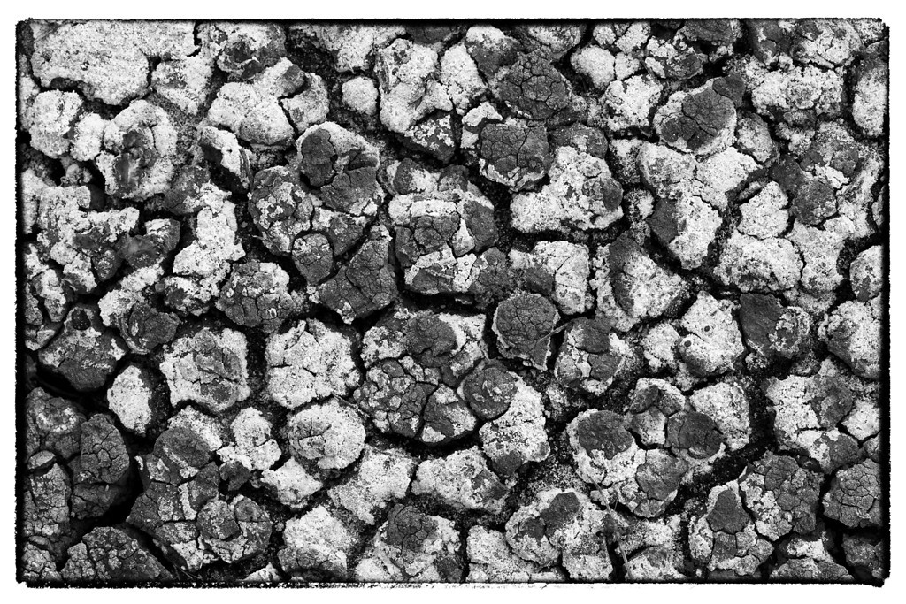Mud Patterns (BW)<br /> C.M. Russell National Wildlife Reserve