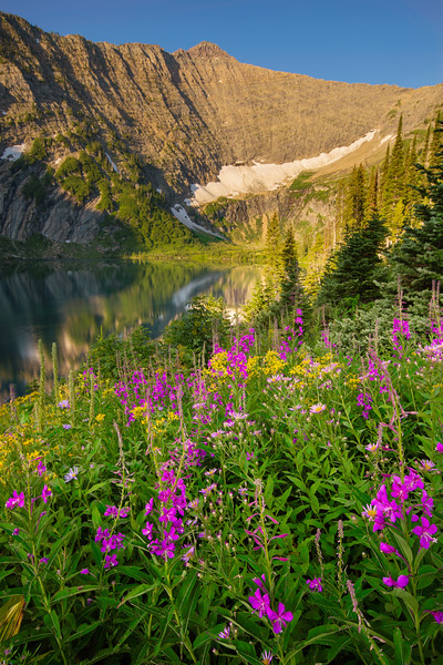 Wildflowers, Ptarmigan Peak and Koessler Lake