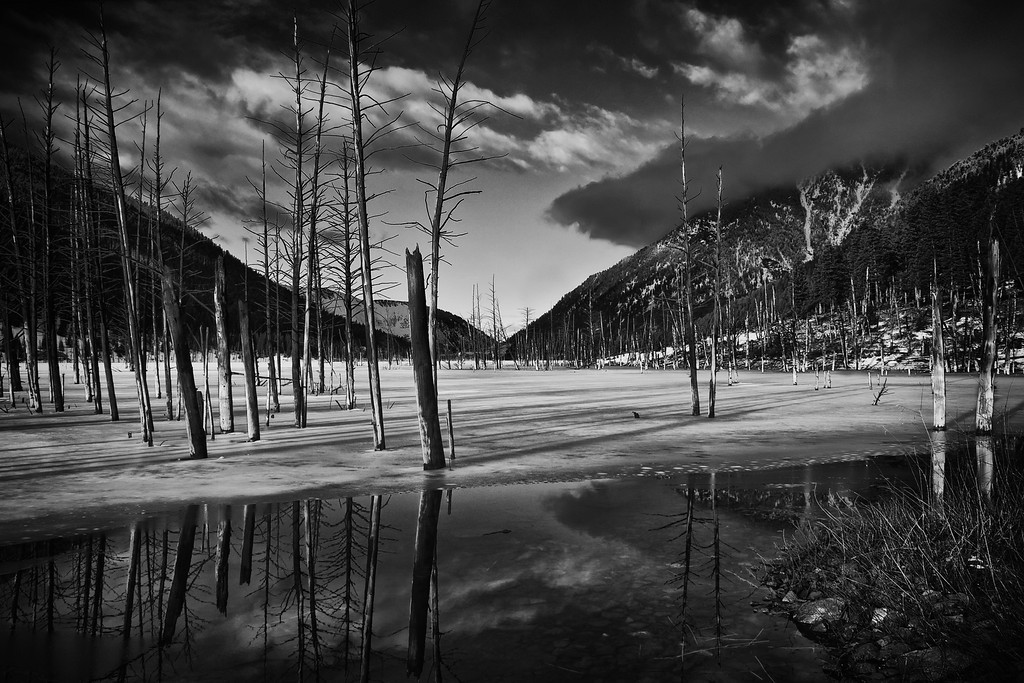 Quake Lake #2 (B&W), Gallatin National Forest, MT