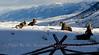 Absaroka Mts  and Big Horn Sheep
