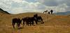 Big Sky Horses.