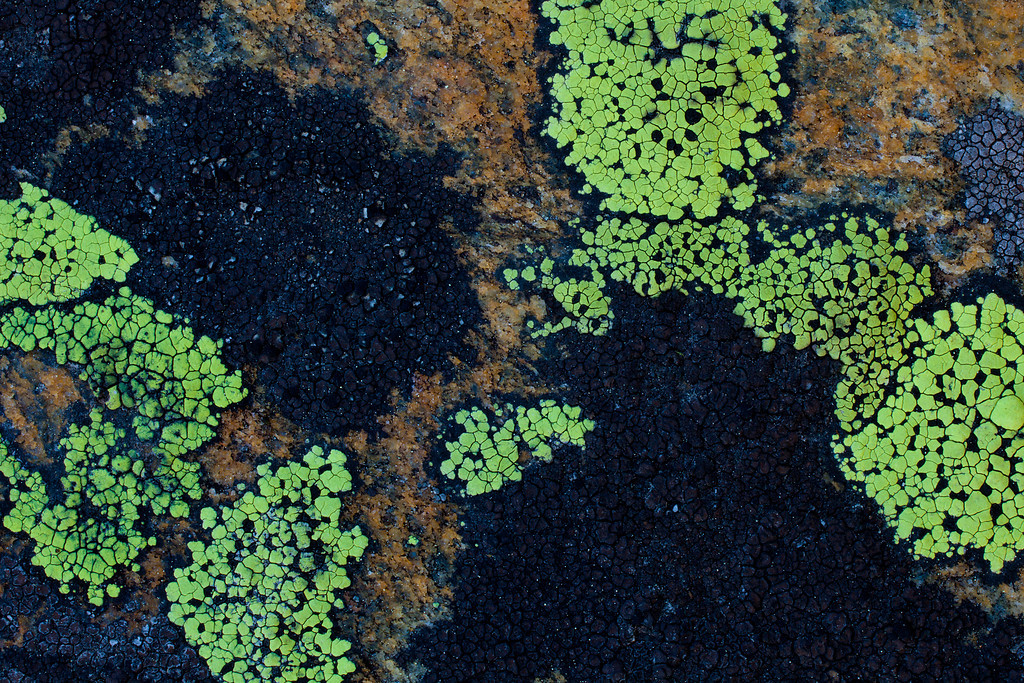 Lichen at Pine Creek Lake<br /> Absaroka-Beartooth Wilderness, Montana