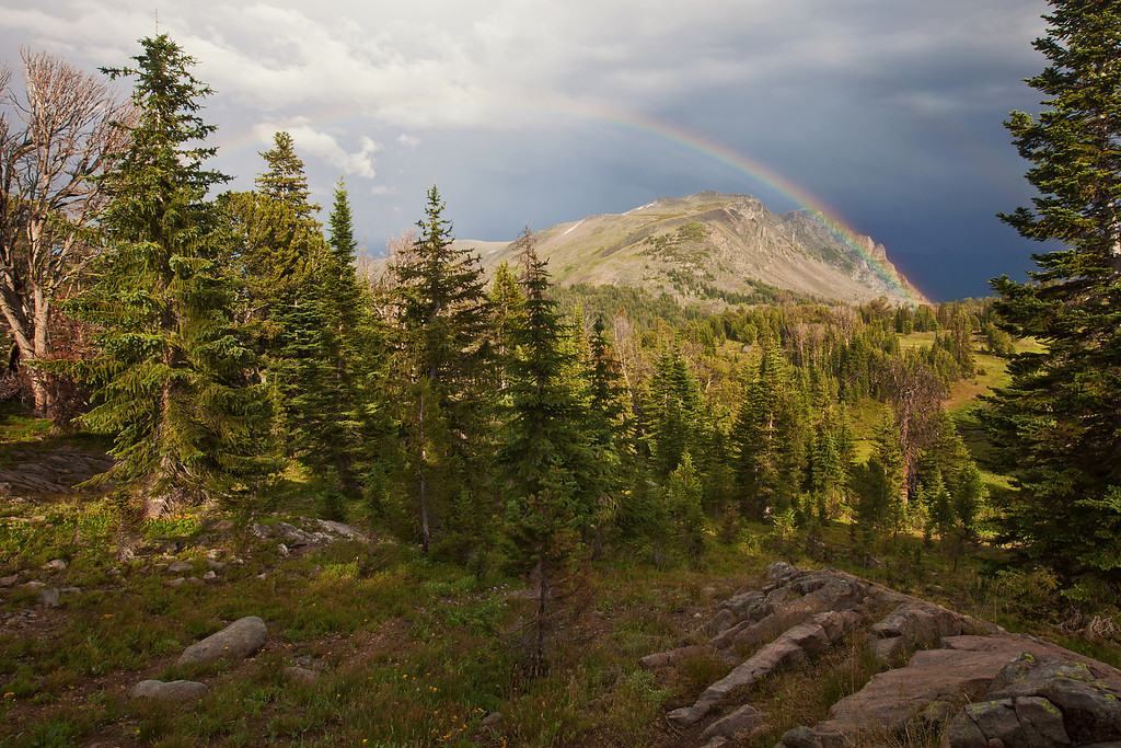 Rainbow, Lake Plateau Region, Absaroka-Beartooth Wilderness, MT