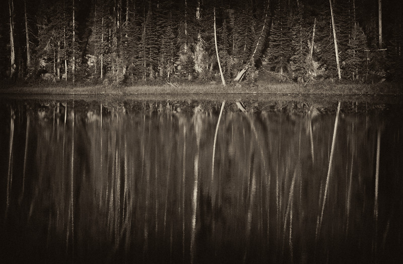 Trees reflected (sepia with vignette added).  Unnamed lake in the Beartooths