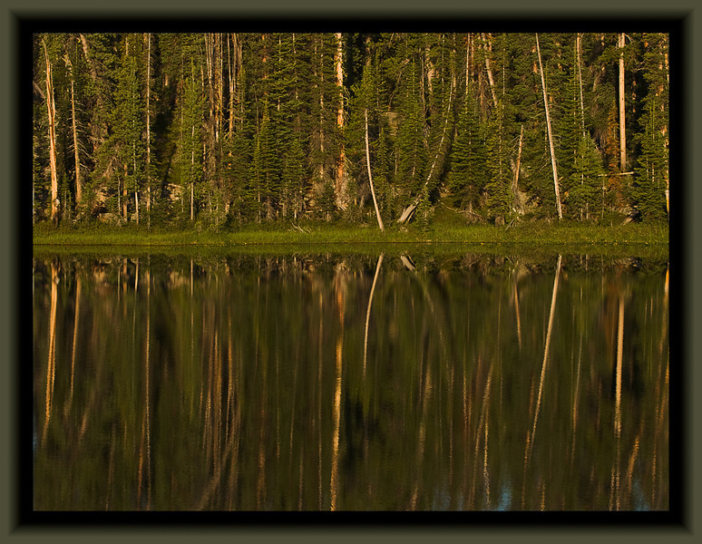 Trees reflected.  Unnamed lake in the Beartooths