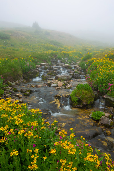 Fog over a mountain stream teaming with wildflowers
