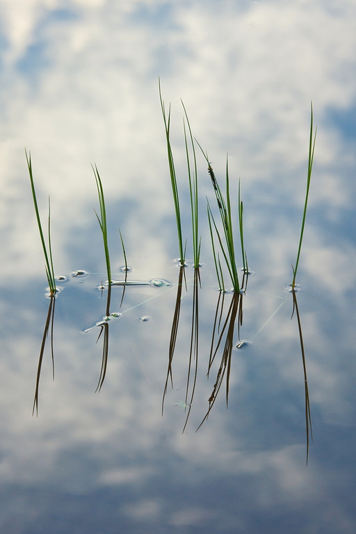 Reeds and Reflected Sky, Lake Columbine, Absaroka-Beartooth Wilderness