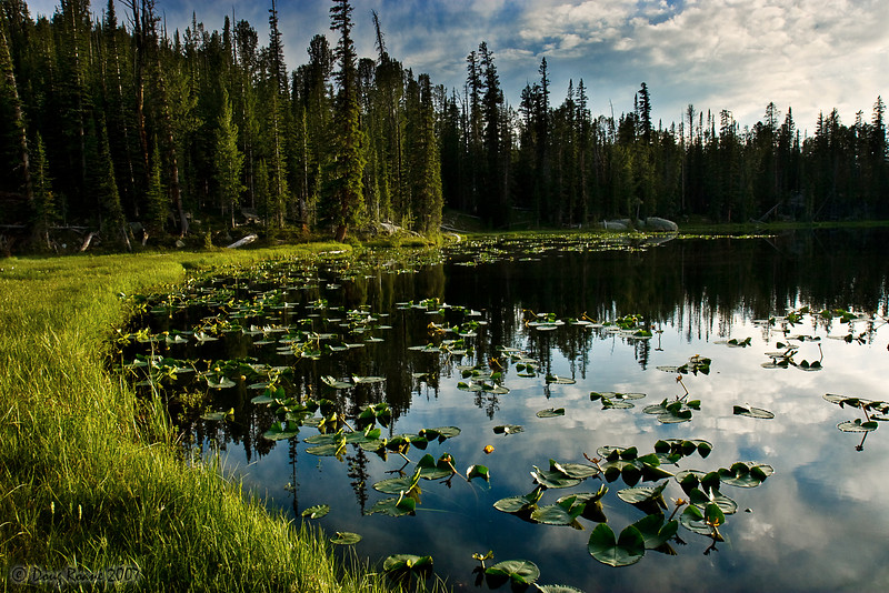Water Lillies on an Unnamed Lake in the Beartooth Mountains<br /> Published in Montana Magazine, May-June 2010