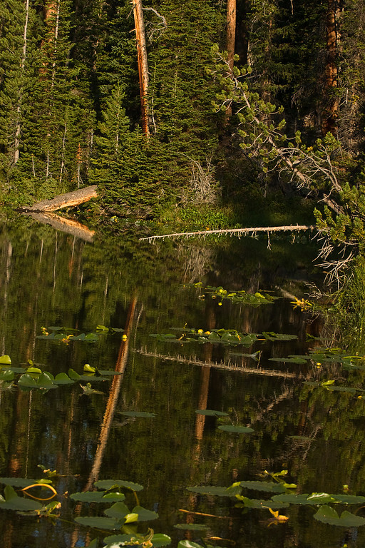 Reflections in an Unnamed Mountain Lake #2.  Beartooth Mountains