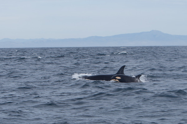 Monterey Bay (2011)